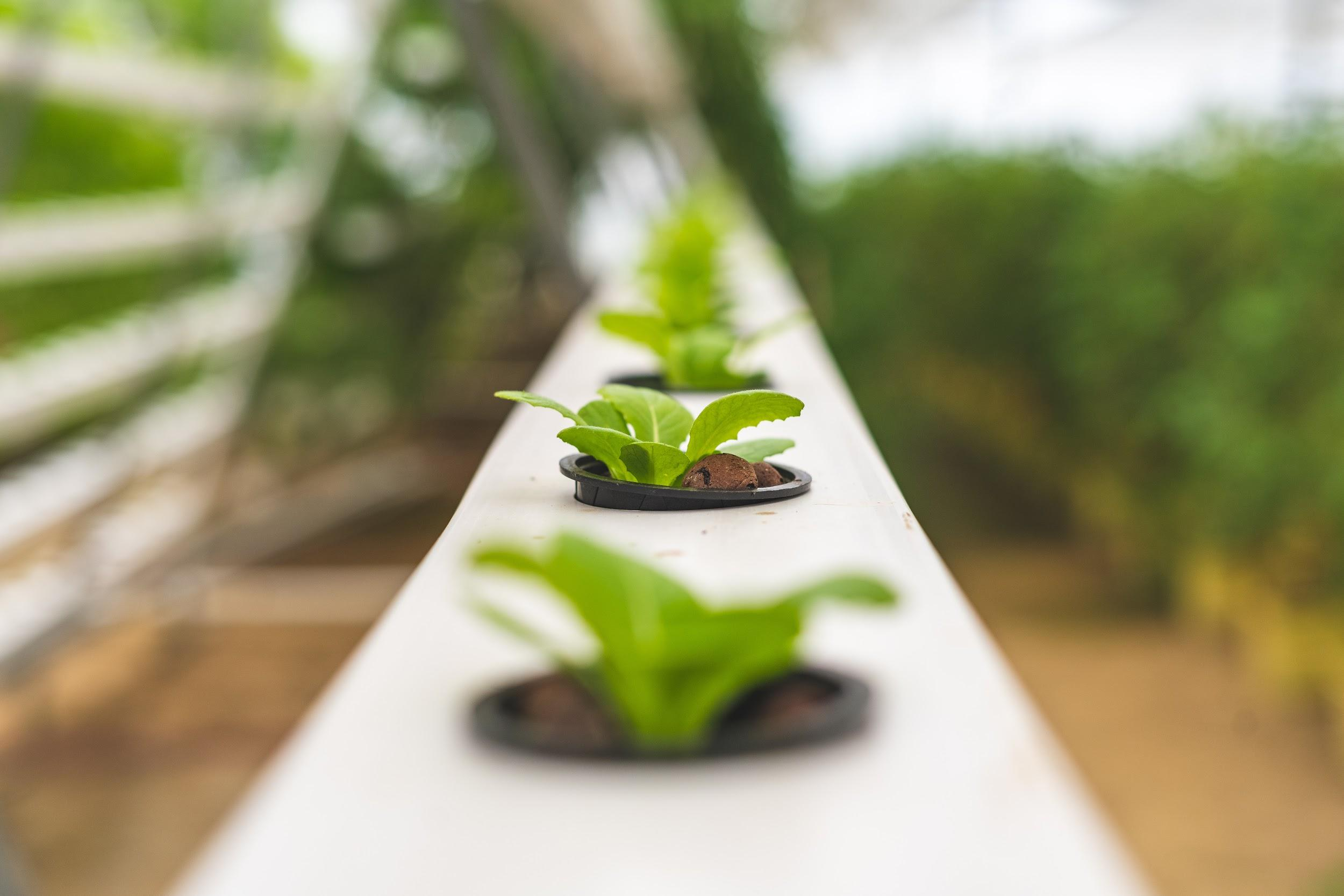 The Latest Trend: Growing Plants Indoor Using Aquaponics