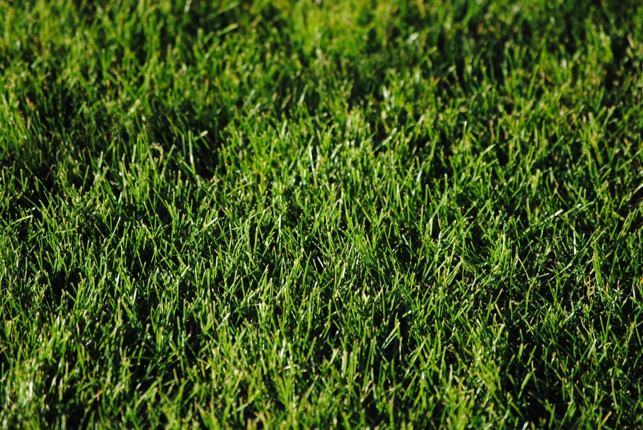 Artificial Grass: The Key To A Maintenance Free Backyard