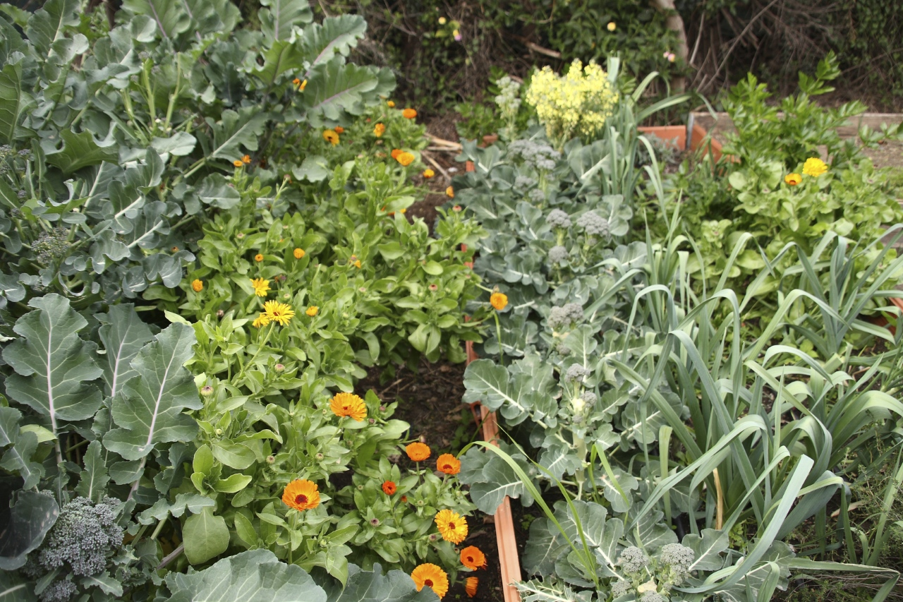 Companion Planting: What To Plant Together & What to Keep Away