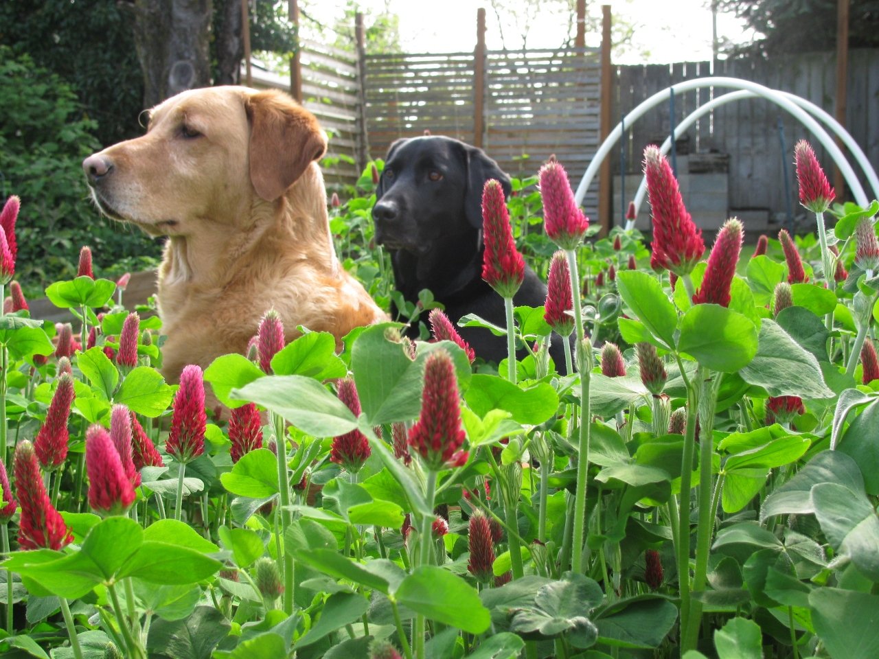 Make Your Garden a Safe Place By Dog-Proofing It
