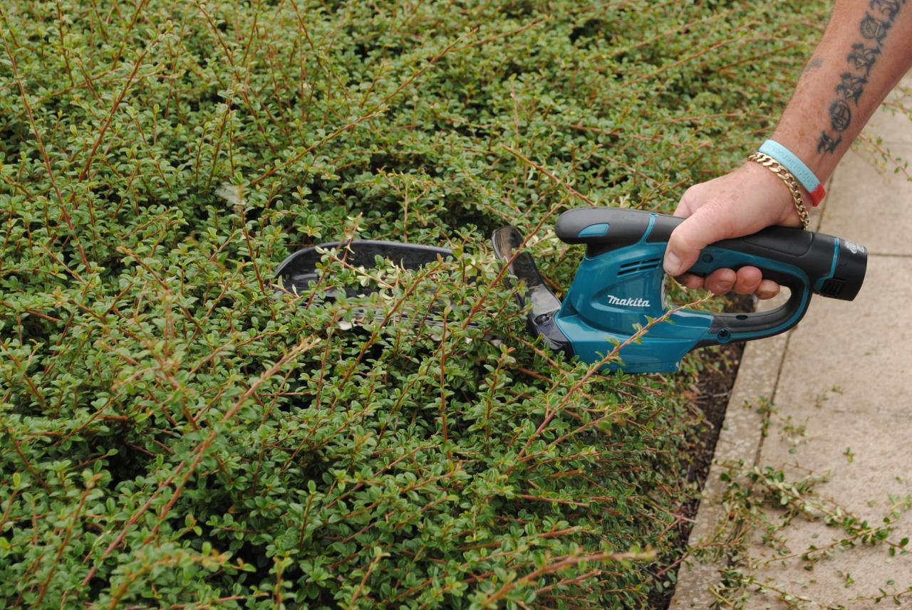 How to Choose an Electric Hedge Trimmer?