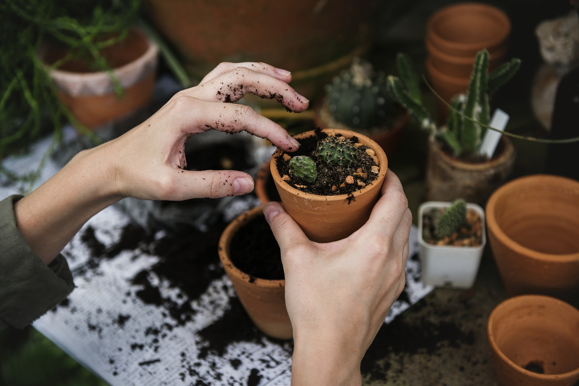 Gardening Can Positively Affect Your Physical And Mental Health