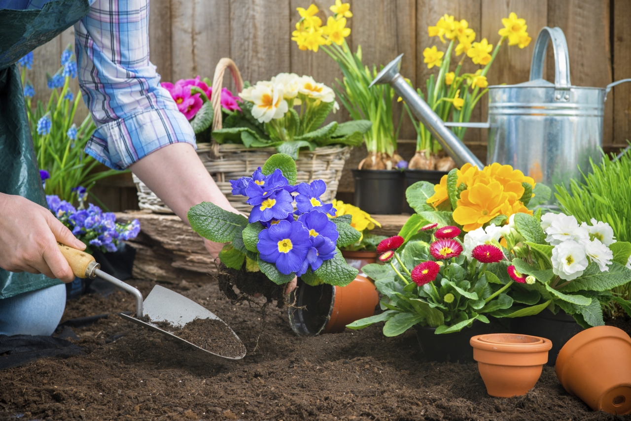A Guide To Gardening During The Early Spring Season
