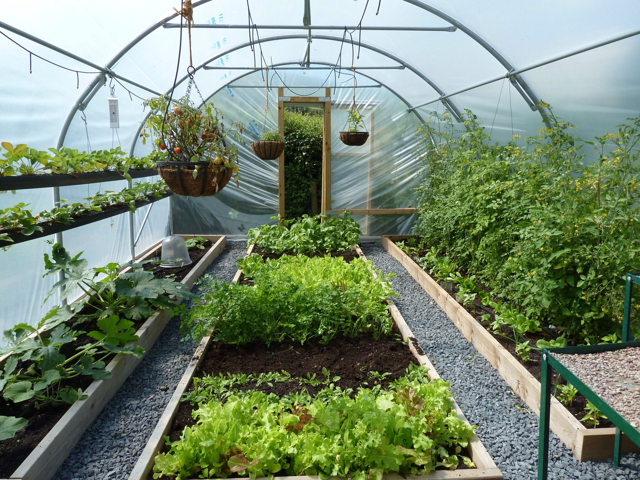 Use of a greenhouse to harbor vegetables