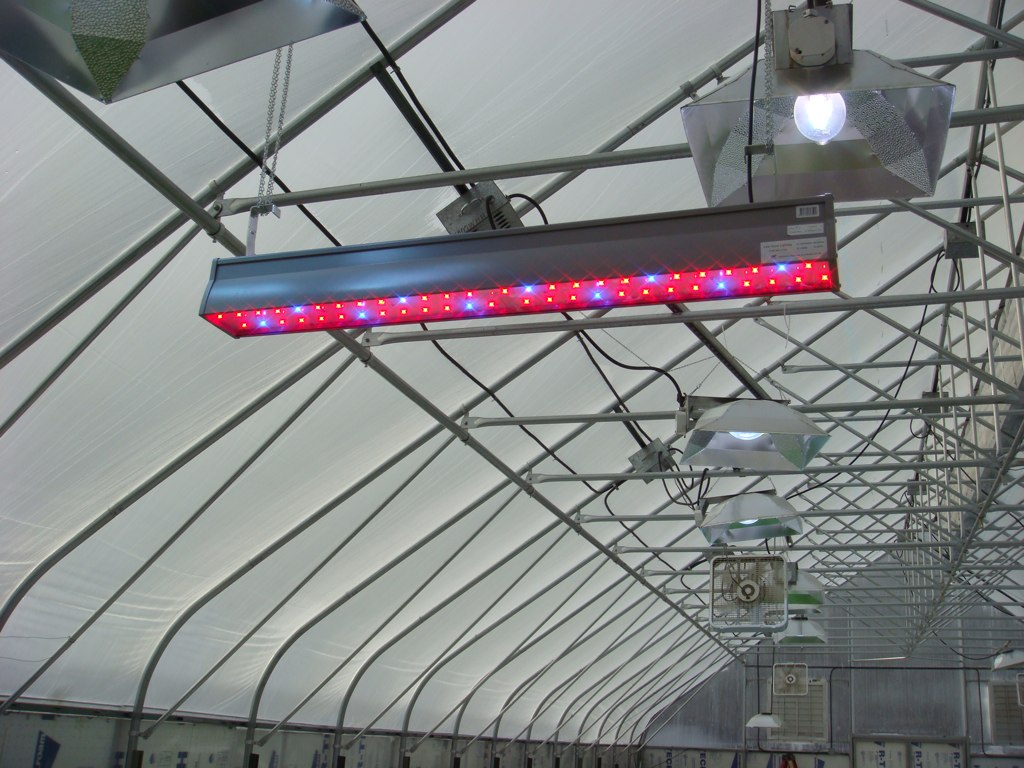 8 Reasons to Grow with LED Lights