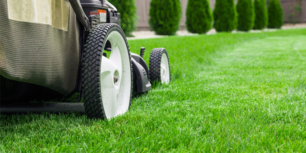 Practices That Go Into A Beautiful Lawn
