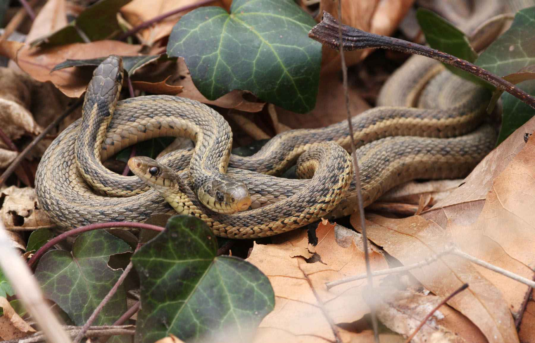 Want to Repel Snakes Naturally?