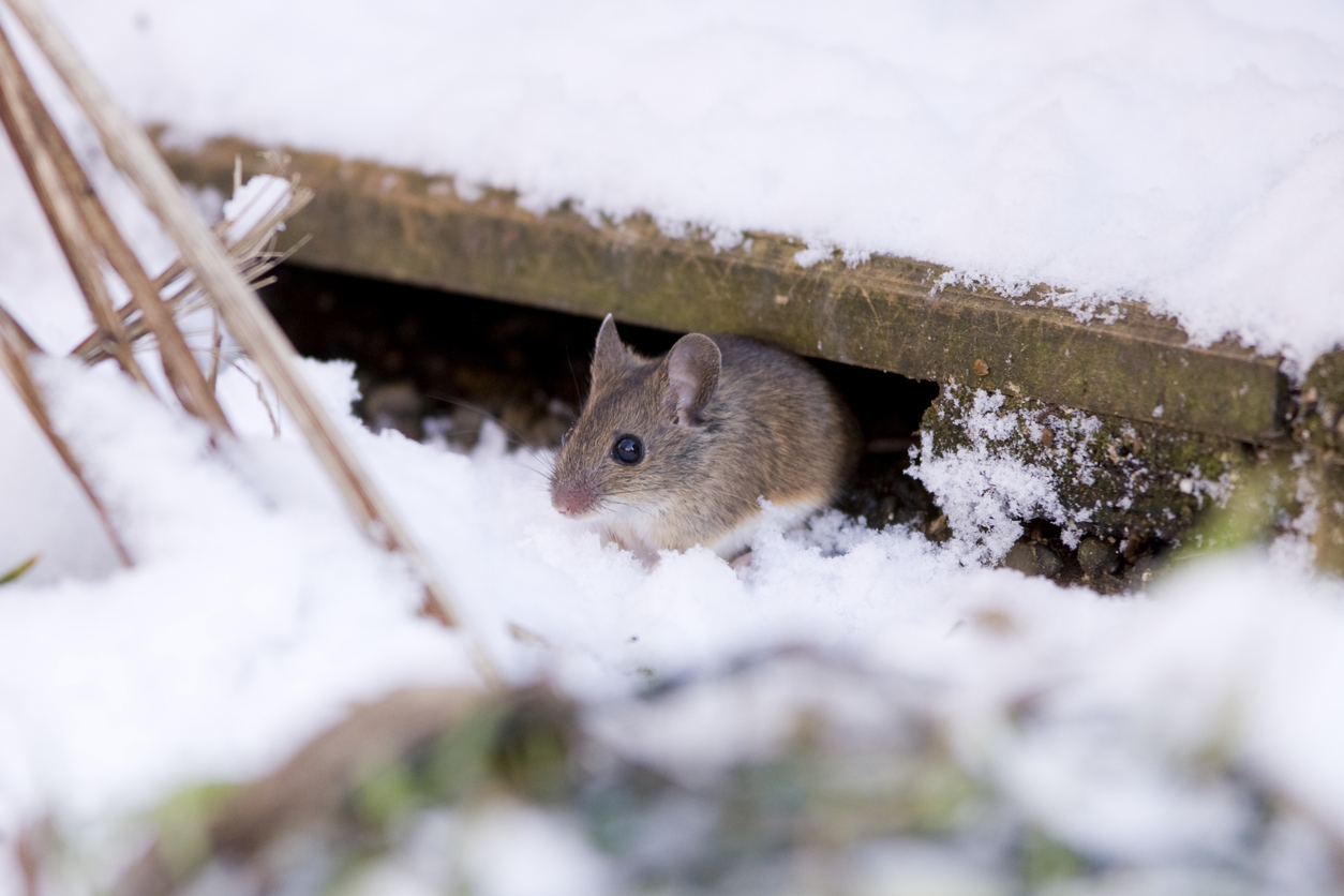 Effective Pest Control Principles for Winter