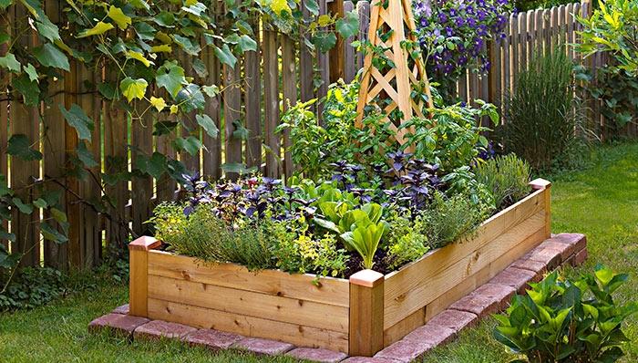 Low Maintenance Garden Ideas For Small Yards Yardyum