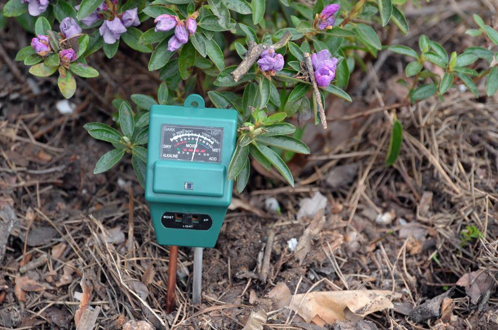 How To Test Your Garden Soil's Ph