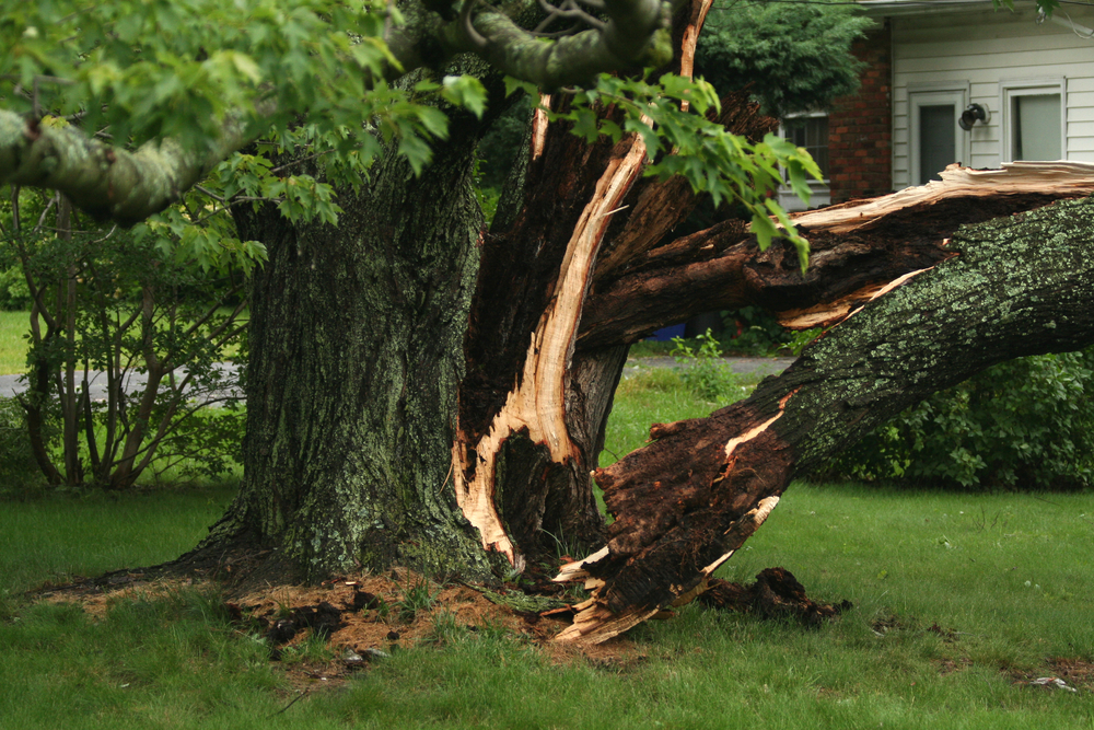 Different Types of Tree Problems That Can Make a Tree Dangerous