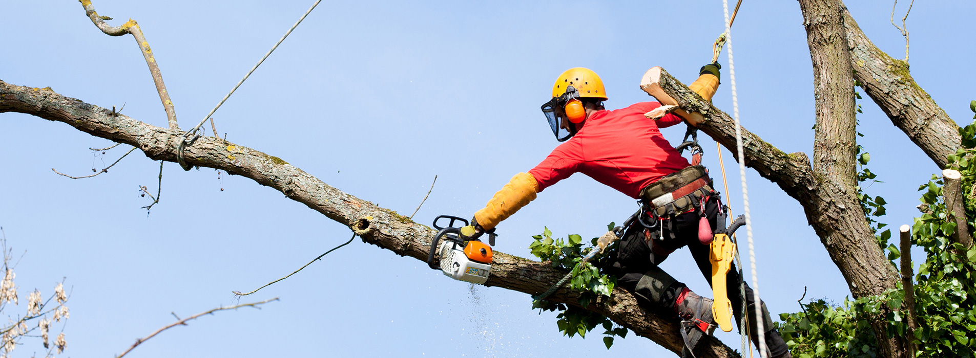 Get The Right Tree Surgeon