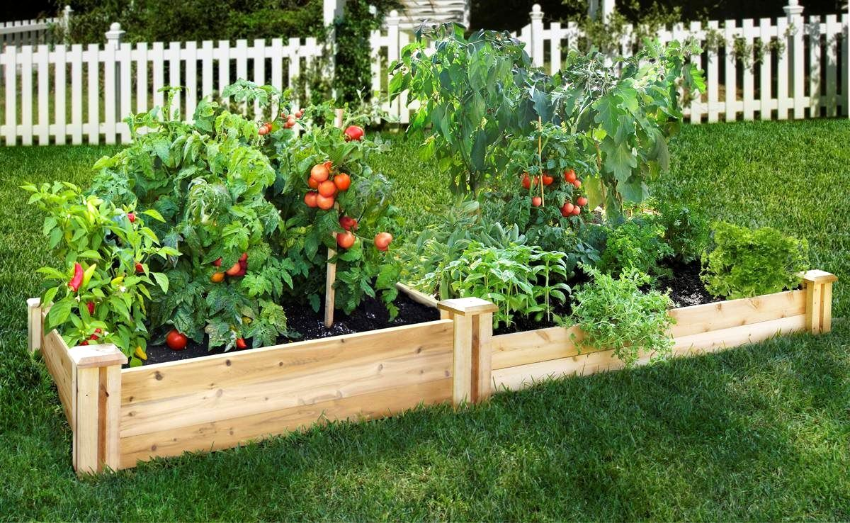 Useful Gardening Insights For Beginners