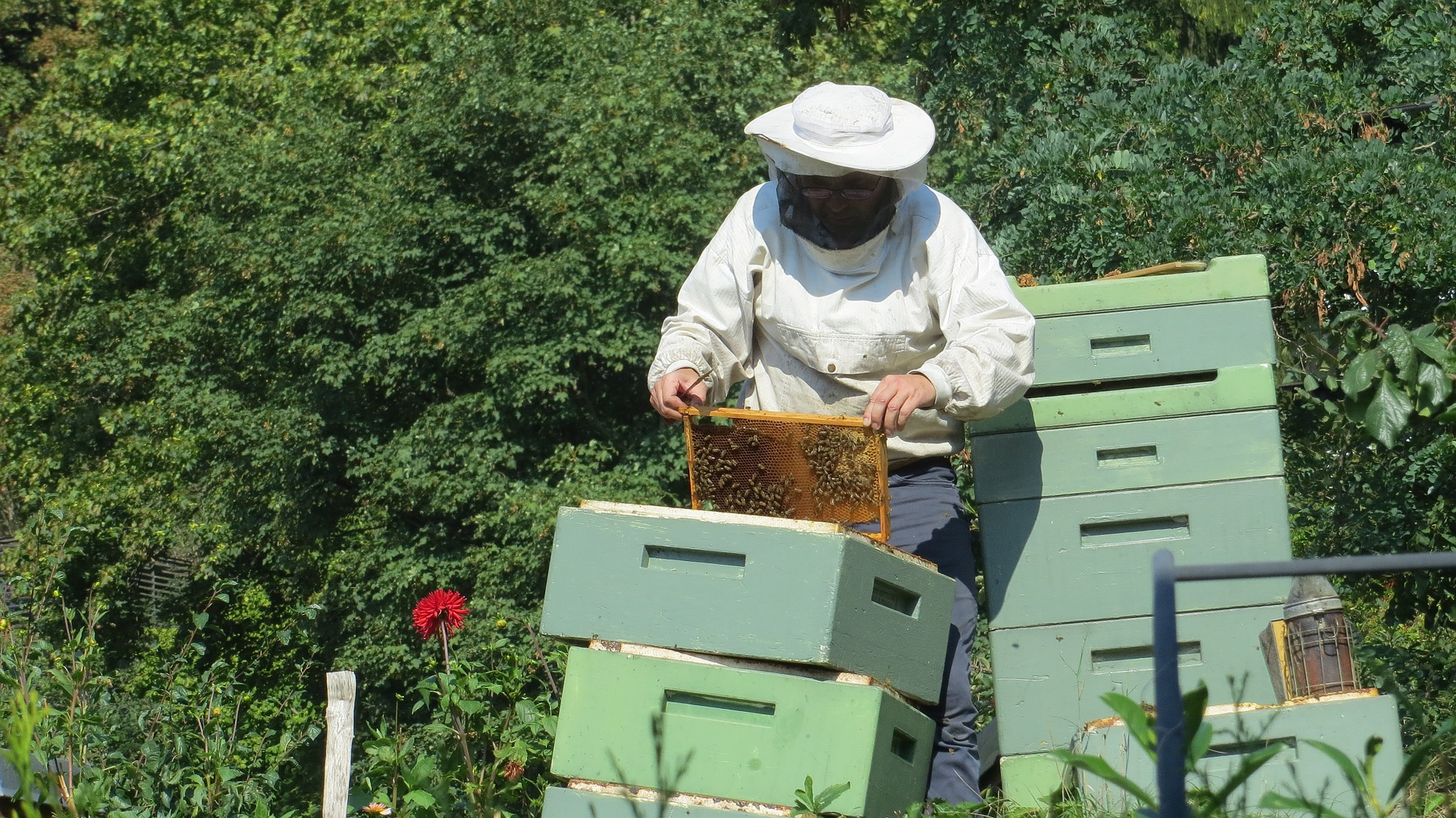 Beekeeping Tips for Beginners