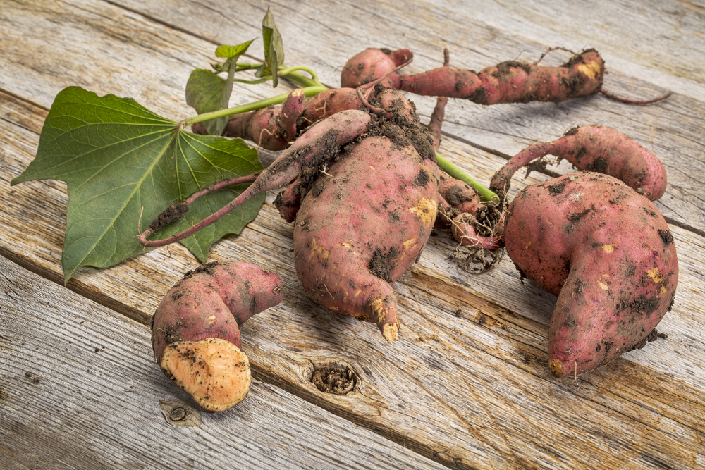 9 Awesome Tips on How to Store Sweet Potatoes Effortlessly