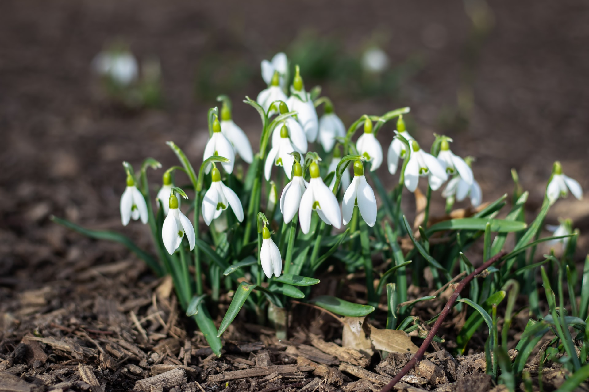 10 EASY Winter Plants for Wildlife Friendly Gardens