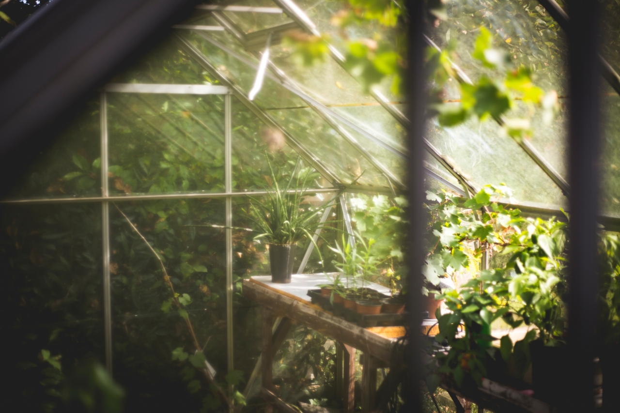 A Guide To Installing A Small Greenhouse In Your Yard