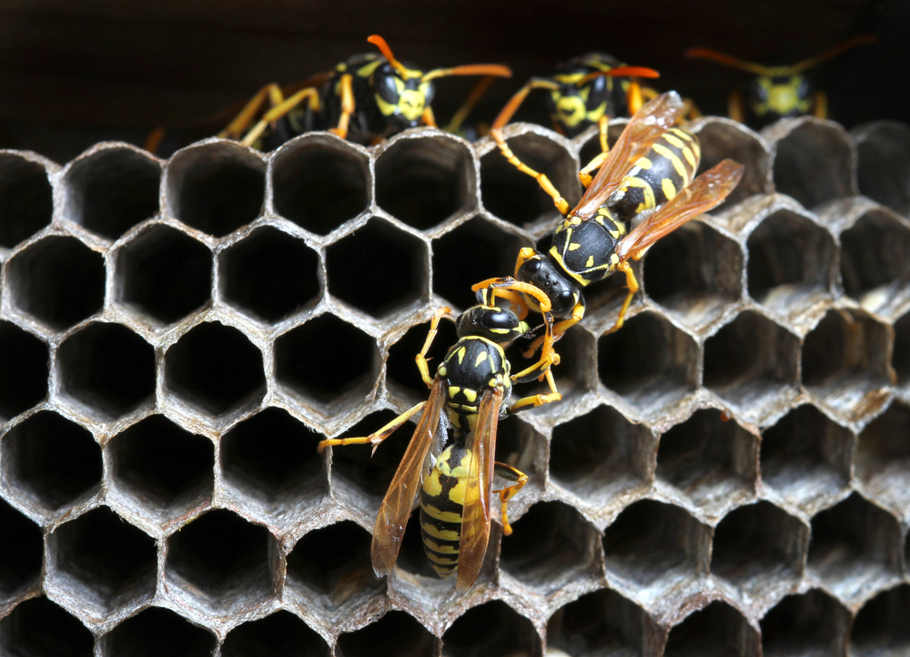 Wasp Facts You Didn't Know