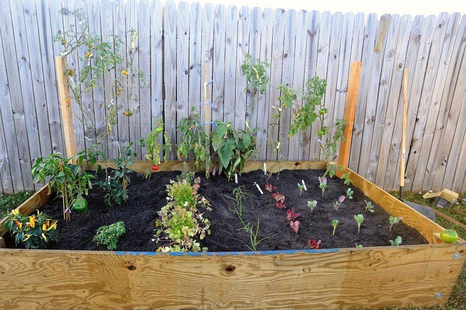 YardYum garden 2