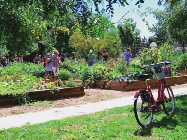 Urban Gardening is for Everyone