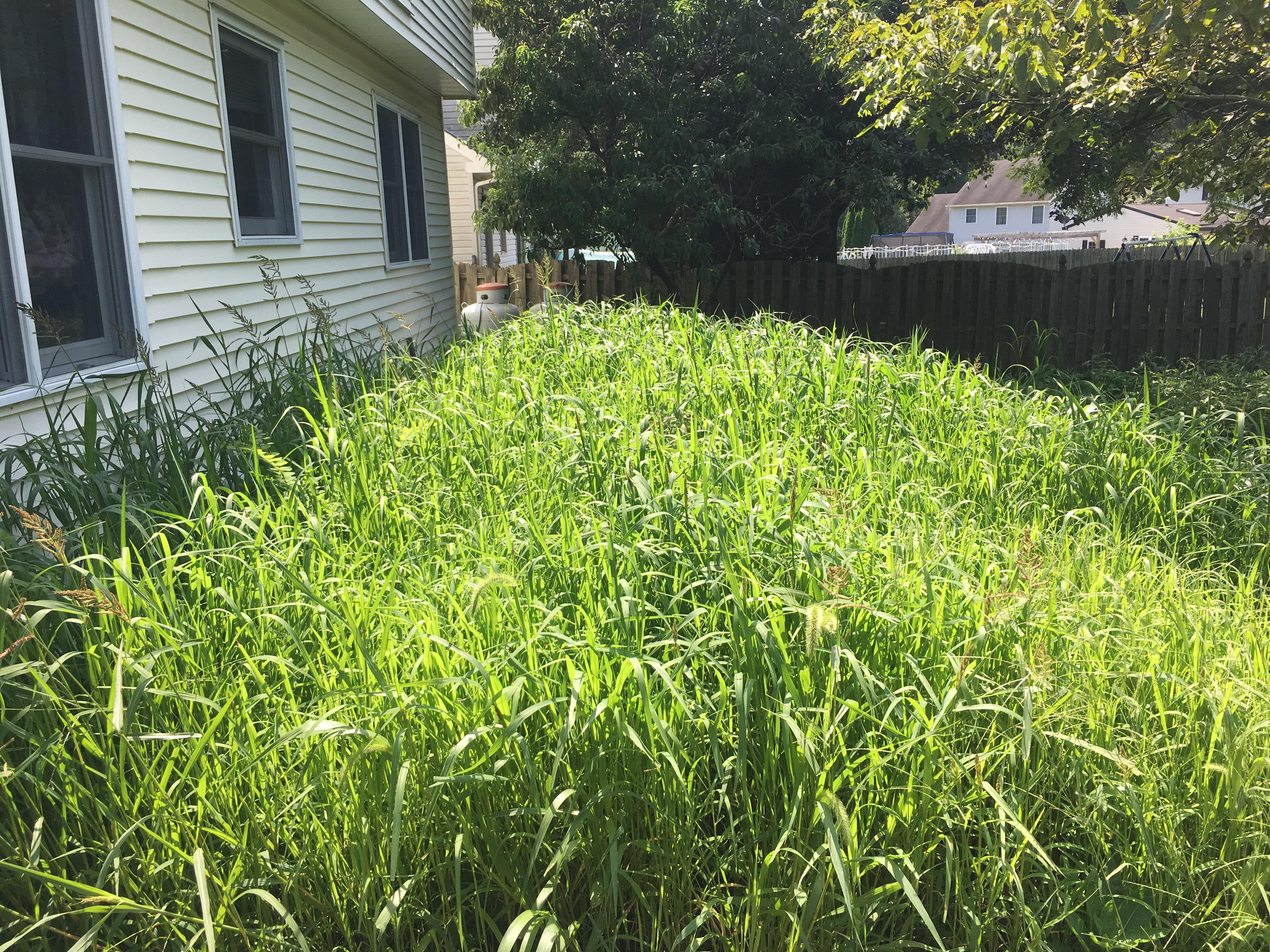 Fenced In Backyard With Overgrown Flowerbeds Ready For